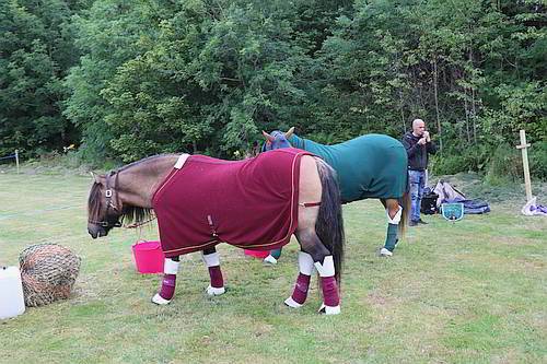 Horse Competition 2019